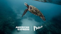 AmEx to roll out card made from reclaimed plastic from the ocean