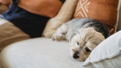 Brits would rather insure their pets instead of themselves